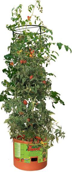 Buy Tomato Barrel With Tower Online