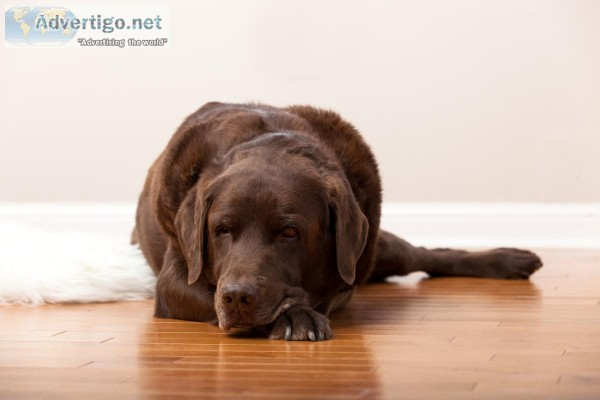 Hardwood Floor Refinishing For Pet Owners Home