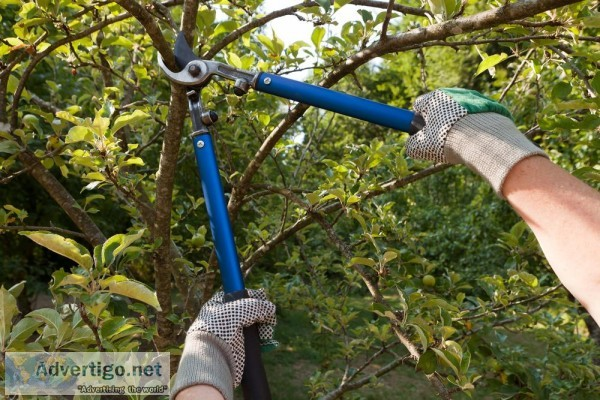 Get Professional Tree Removal And Maintenance Services