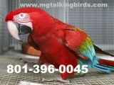 Dna checked parrots looking for new home