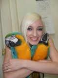 Tame blue and gold macaw parrots