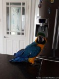 Blue and Gold Macaw Accessories and Cage 678 744 6389
