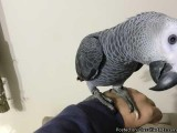 Fully Trained Talking Parrot
