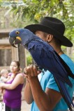 Hyacinth macaw is available