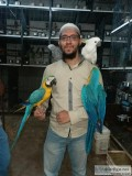 2 Macaw Parrots Available for you
