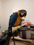2 Years Macaw And Cage