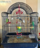2 chirping parakeets and beautiful cage