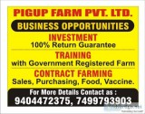 pigup farmming and services