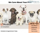 Best Dog Boarding services in Hyderabad-petshub