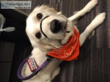 Train Your Dog to be a Service Dog