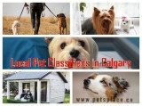 Find Tried and Tested  Local Pet Classifieds in Calgary using Pe